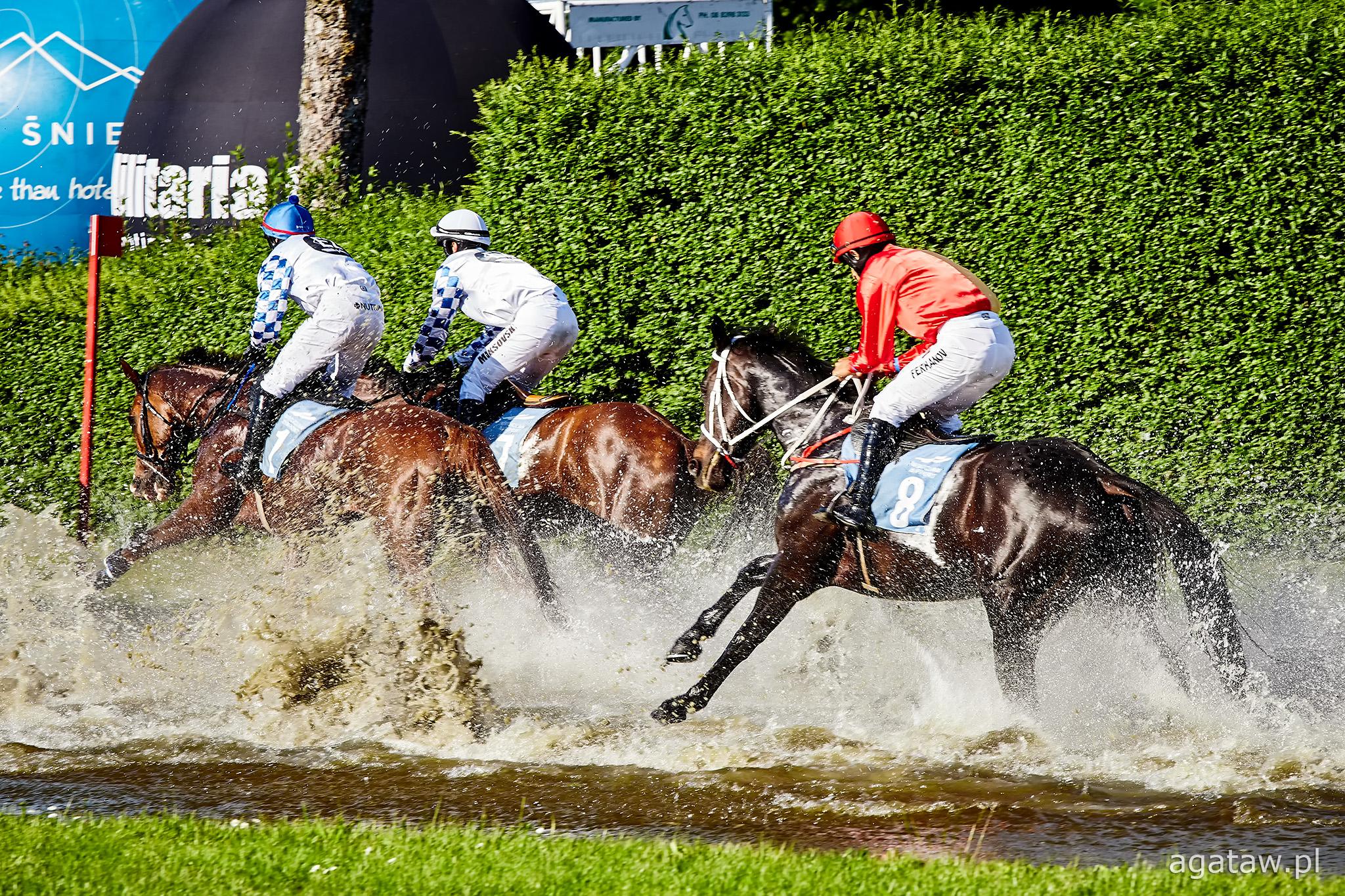 img: Komunikat dotyczący wjazdu koni na tor