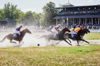 img: Ponad 200 koni