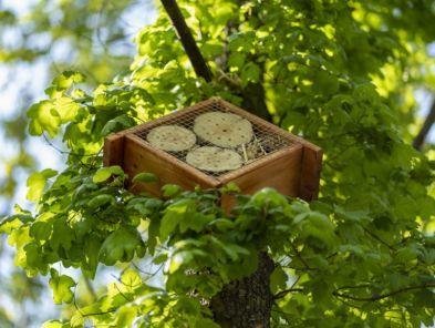 img: Domki dla owadów na Partynicach