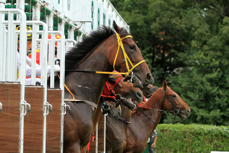img: Partynickie konie w klasykach