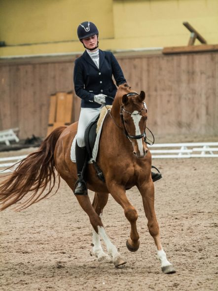 img: Wrocław Regional and Social Indoor Competition in Dressage