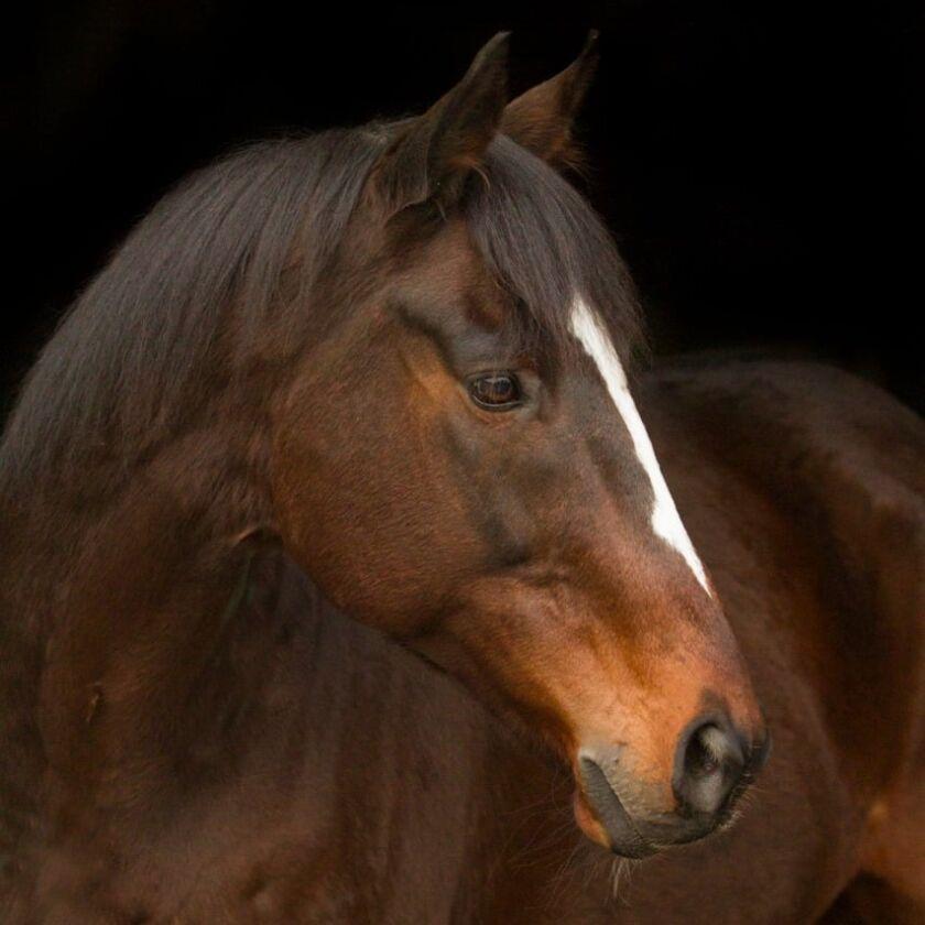 img: Dabadiyan i Igor – najpopularniejszymi końmi roku 2020 na Partynicach