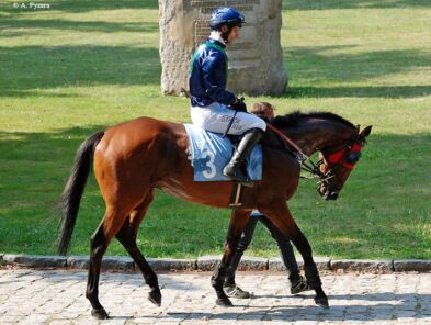 img: Haad Rin sprawdzi się na trasie krosu w Compiegne