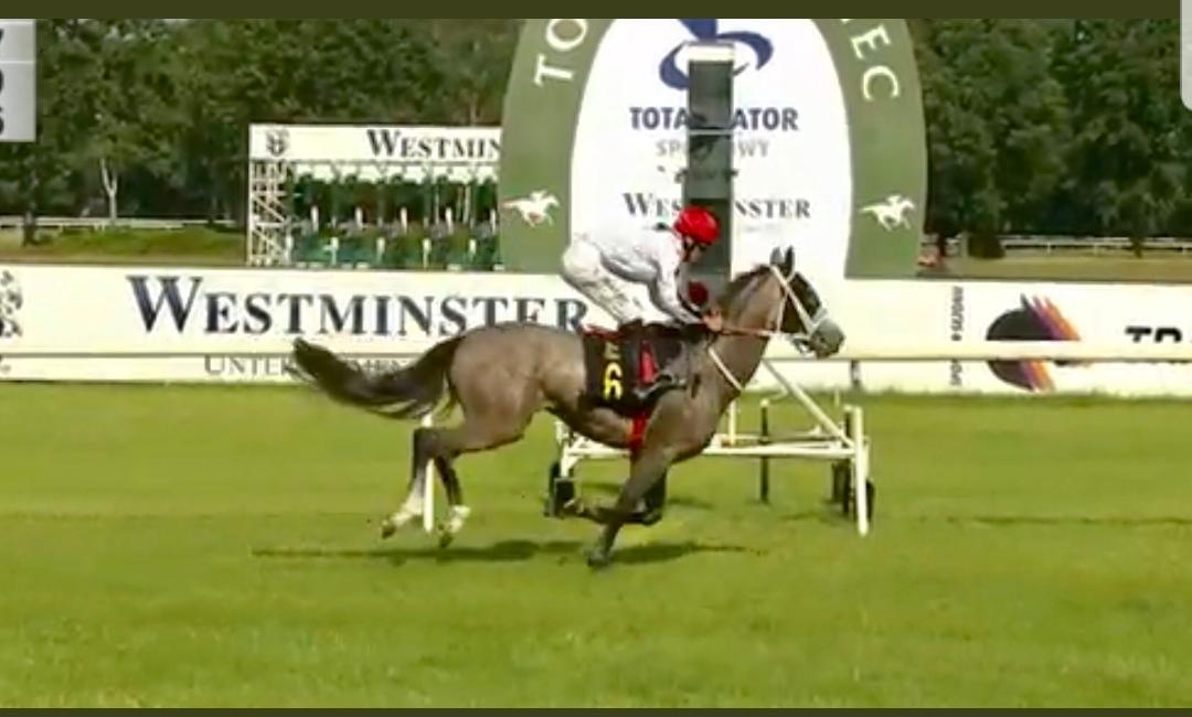 img: Środkowoeuropejskie Derby koni arabskich