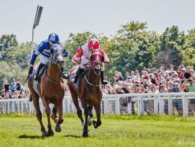 img: Trzy wygrane koni z Partynic