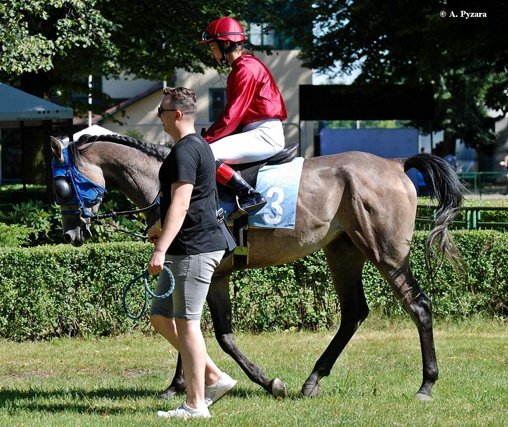 img: Nagroda Wielkiego Szlema z partynickimi końmi