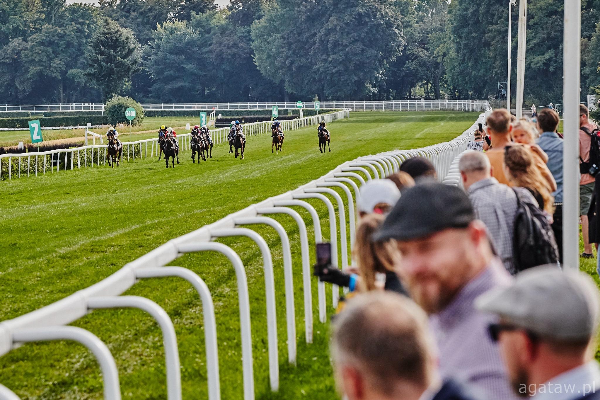img: Wyścigowa sobota z partynickimi końmi